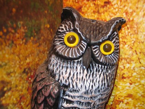 owl-evil-cu